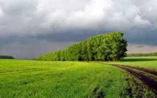 Снятие с кадастрового учета земельного участка