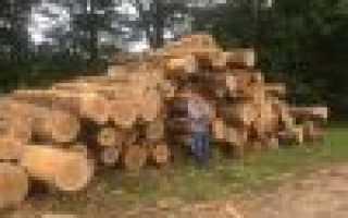 Бесплатный лес на строительство дома