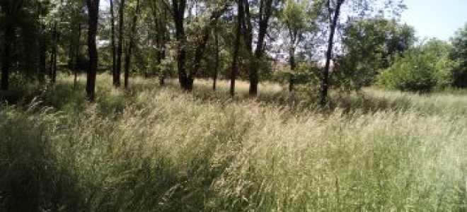 Выделение доли земельного участка в натуре по закону