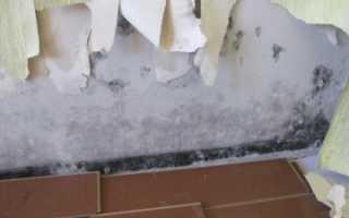 Мокнет стена в квартире: что делать и куда обращаться